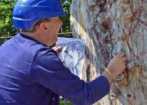 Priory 900 Elm Tree Project